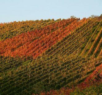 Weinhänge bei Salem; Foto: Pixabay, gemeinfrei